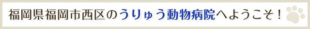 福岡県福岡市西区のうりゅう動物病院へようこそ!